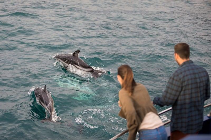 Dolphin encounter in Kaikoura