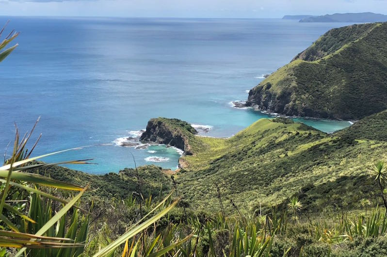 New Zealand wilderness.jpg