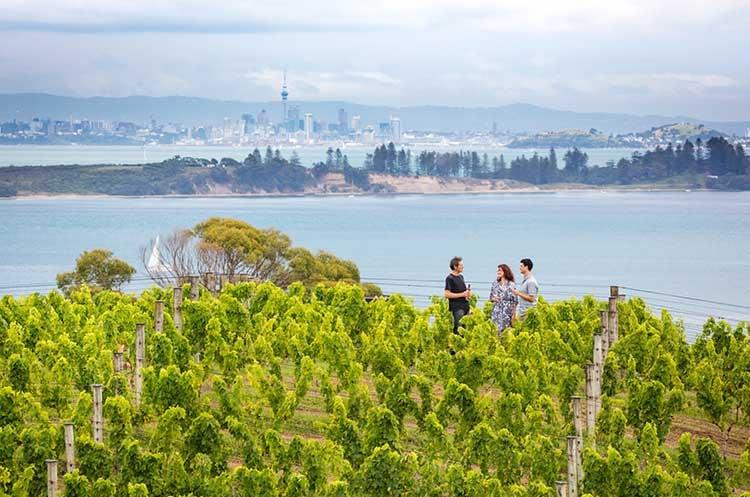Waiheke-winery-tour-nz