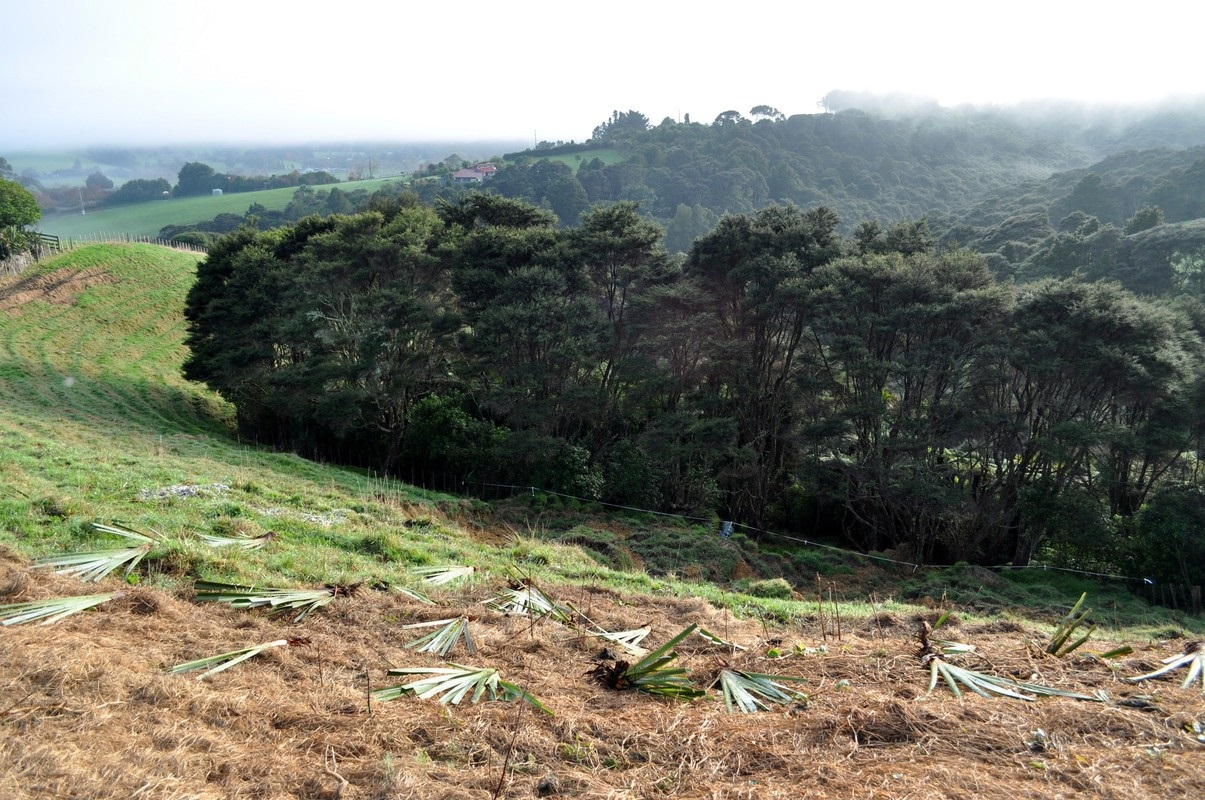 Wilderness Motorhomes team replanting trees