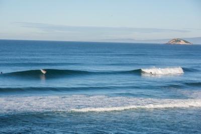 4. surfing-perfect-lineup-dunedin.jpg