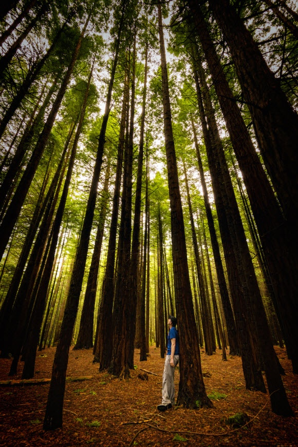 Place yourself on the movie set at the Redwoods Forest Rotorua